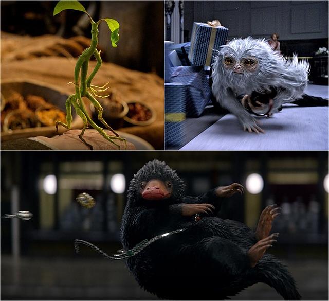 【電影心得】怪獸與牠們的產地 Fantastic Beasts and Where to Find Them。怪獸與牠們的產地影評/怪獸與牠們的產地心得/怪獸與牠們的產地評論/怪獸與牠們的產地評價/JK羅琳2016電影