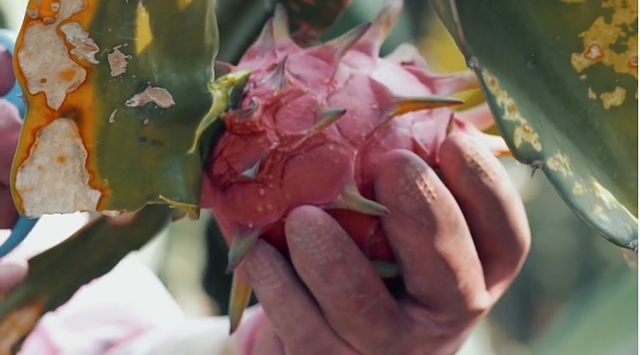 【台灣農產品】農委會鮮享在地微電影首映會/頒獎典禮–從影片中深刻了解在地農產品的特色,無農藥的蔬果便宜又健康!