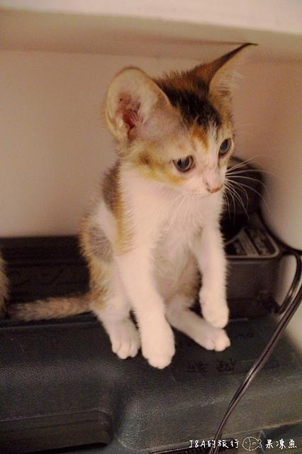 【捷運國父紀念館】Toast Chat–與超萌店貓一起品嚐多變的法式吐司