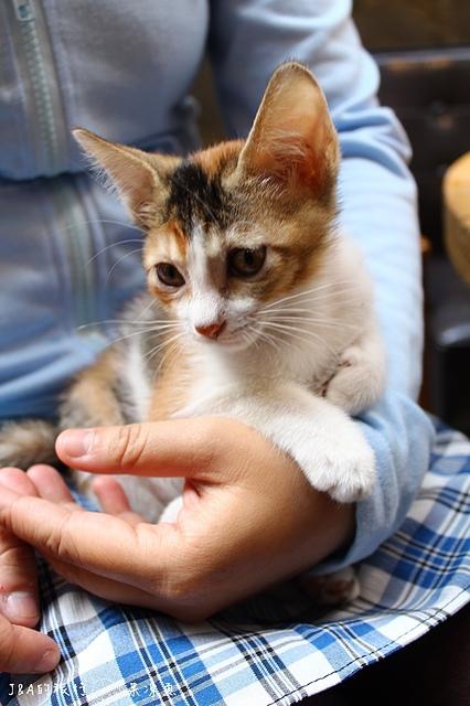 【捷運國父紀念館】Toast Chat–有可愛的貓咪與美食陪你度過~
